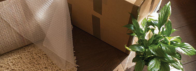 Plant pot, cardboard box and new carpet