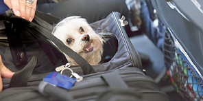 Taking pets on a plane