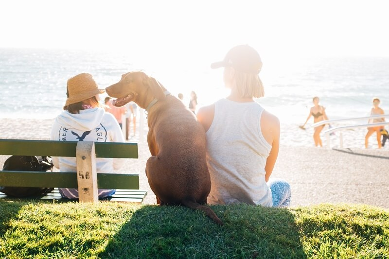 If you're planning to take your pet on holiday follow the Post Office guide to travelling with dogs and you'll both be lapping up the sun in no time.