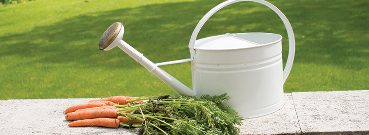 Watering can and carrots